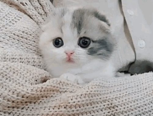 Too Cute Kittens Will Make You Smile