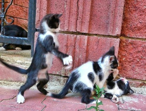 Mother Cat and Playful Kittens in Istanbul 2019 (Cute!)