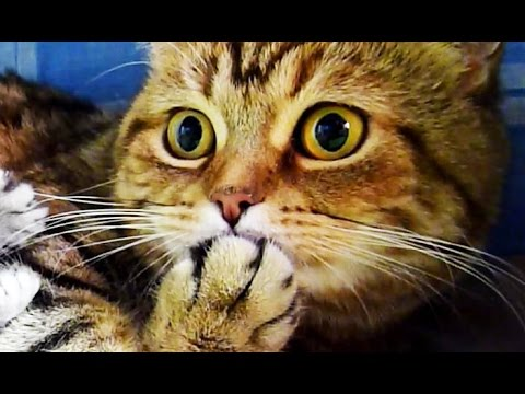 Cute Kittens and Funny Cats  Videos Compilation | Happy Birthday Coco !