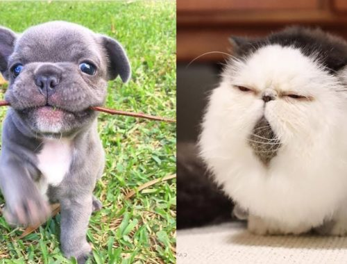 Cute moments of puppies, kittens - Cutest baby animals