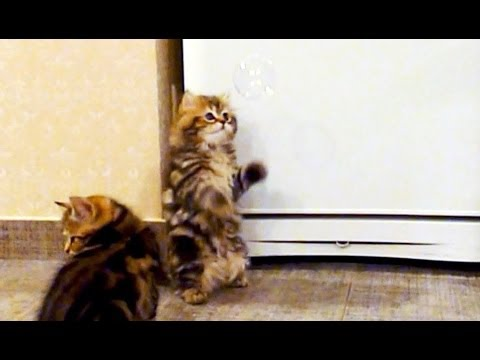 Cute Kittens and Soap Bubbles