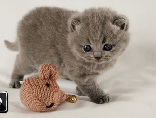 Cute Kittens Playing With New Toy | Too Cute!