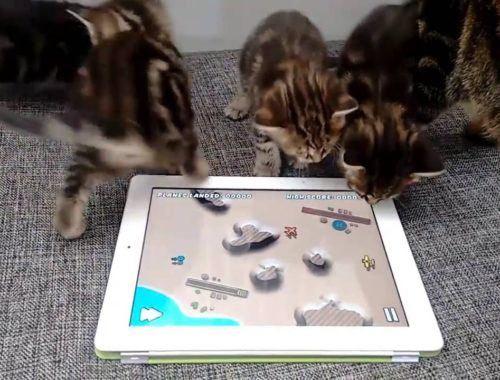 Adorable cute kittens playing a mobile game :)