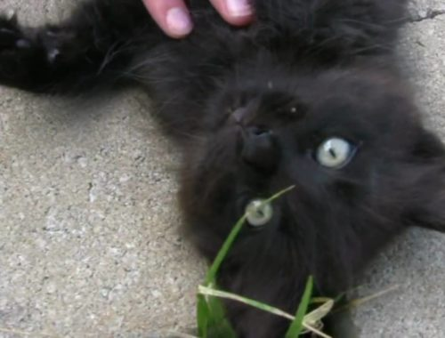 See How Big Our Cute Kittens Have Gotten (Funny Cat video requested by viewers)