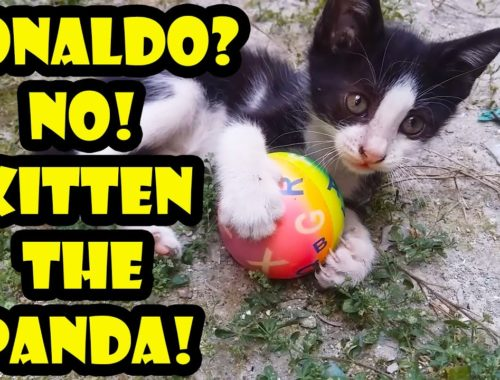 Five Baby Kittens Playing Game   Kitten Videos   Cute Kittens l Adorable Cats