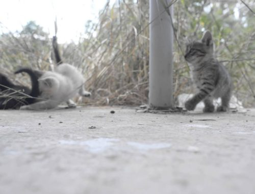 Adorable and cute kittens playing with each other HD
