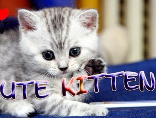 Cute Kittens ✪ And Funny Kitten Videos Compilation 2.0 [SV Life]
