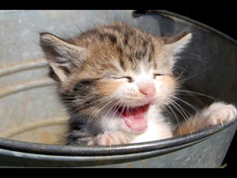 Kittens Meowing - A Cats Meowing Compilation [CUTE]