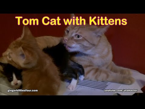 Cute Kittens with Tomcat