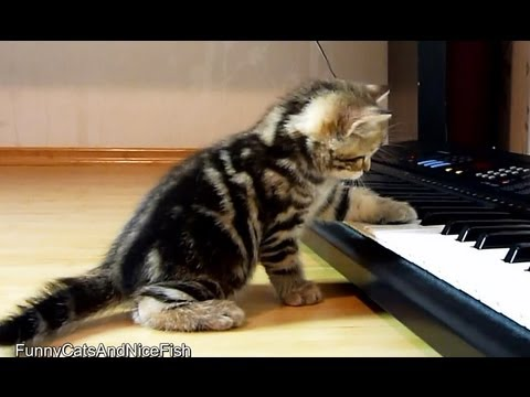 Cute Kittens  Musicians playing piano