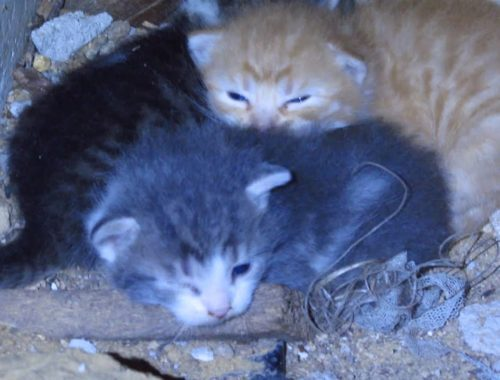 Cute kittens - New baby kittens in the basement