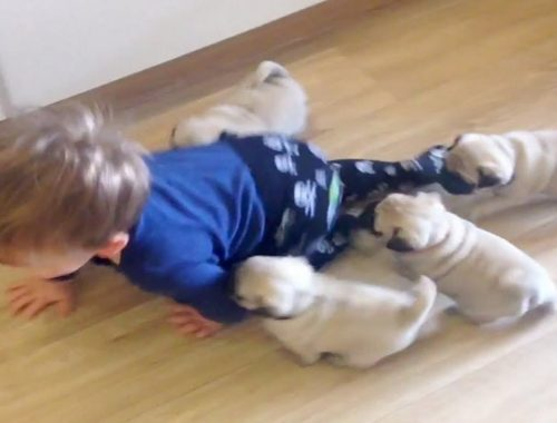 Funny  And Cute Kittens And Puppies Chasing Kids To Play!