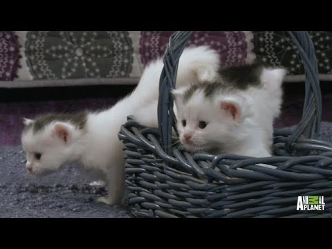 A Basket Full of Kittens | Too Cute!