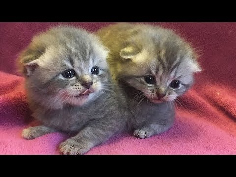 A Funny and Cute Kittens Video -  Cutest Kitten Compilation 2018