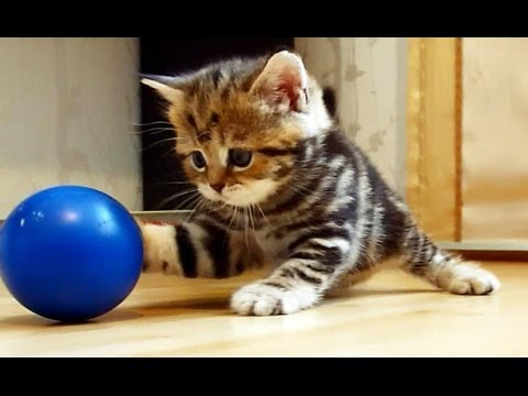 Funny Cats compilation : Olympic Games for Cute Kittens