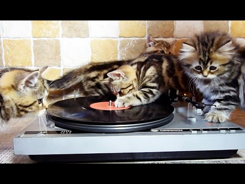 DJ Cute Kittens