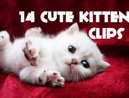 Cute Kittens And Funny Kitten Videos Compilation | 14 Kitten Video Clips | Cute Adorable Kittens