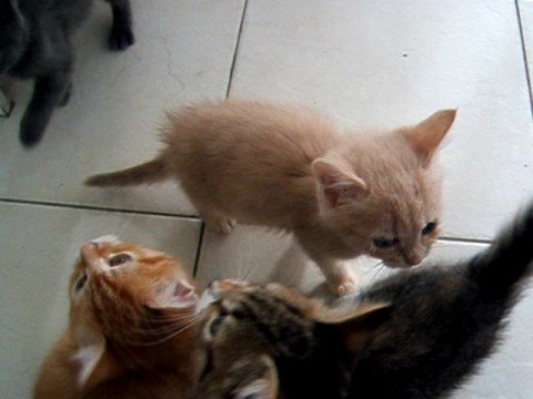 Noisy kittens waiting for dinner!