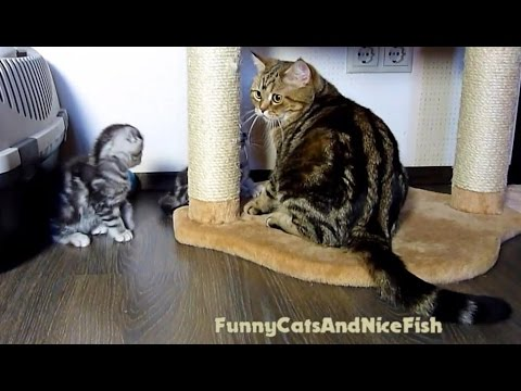 Let's play together ! Funny  Mom Cat and her  Cute Kittens