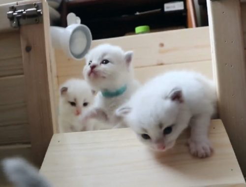 These Cute Kittens Will Make You Happy And Love Your Life ✅