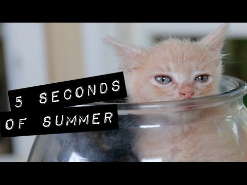 5 Seconds of Summer - She Looks So Perfect (Cute Kitten Version)