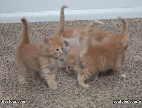 Cute kittens exploring