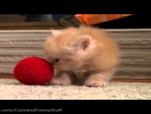 Cute Kittens Compilation