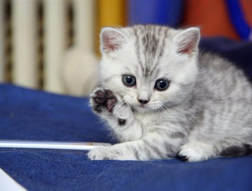Cute Adorable Kittens - Cute kittens meowing