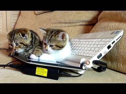 Funny Cat Moments | Cute Kittens learn computer
