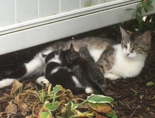 Mommy Cat And Her Cute Kittens: Feeding Time