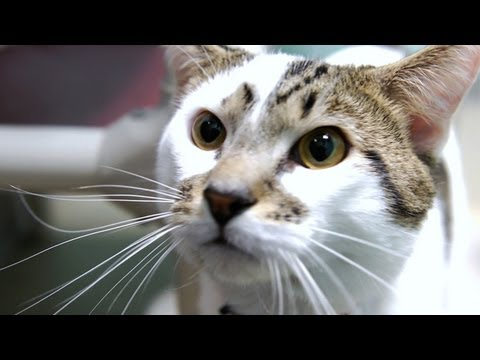 Cute Kittens and Cats Pounce Around!