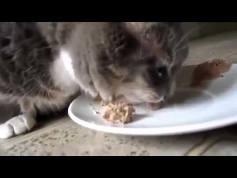 Top Best Funny cats and animal Video for Kids,Cute Kitten Compilation Funny Cat Videos