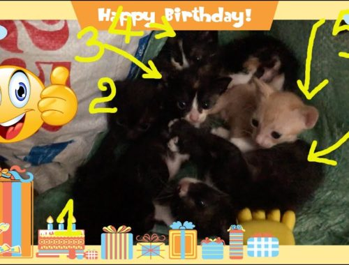 6 cute kittens look at you and sneeze
