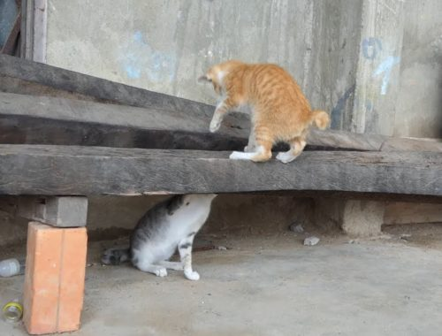 The cute kittens play _ Kittens afraid of me _ Give food to cat