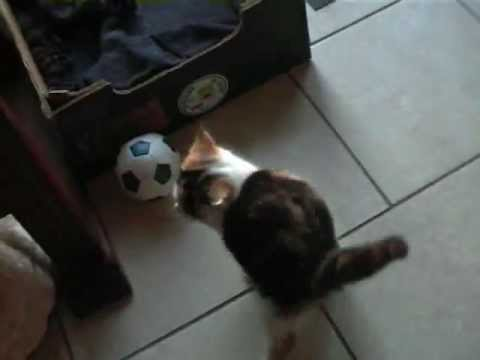 comedy: funny cute kittens having fun messing around