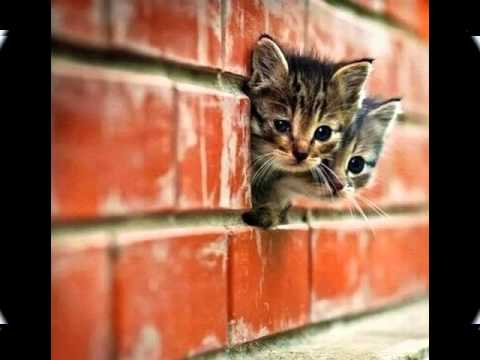The Cutest Kitten Pictures Ever - Cutest Cat Moments