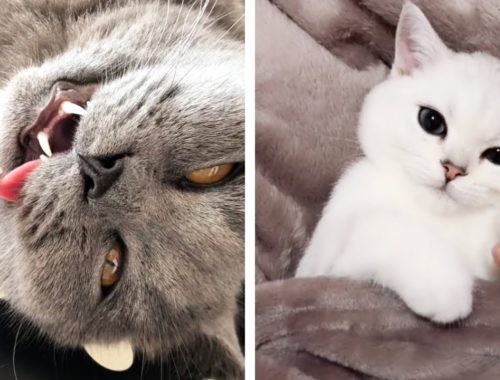 Tik Tok Cats | MOST Cute and FUNNY Cats and Kittens shooting #1 🐈🐱