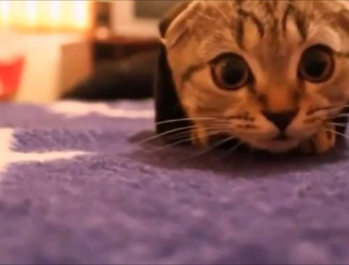 MOST AWESOME FUNNY CATS! Top Funniest Cat Compilation Cute Kittens Best Vines PART 3
