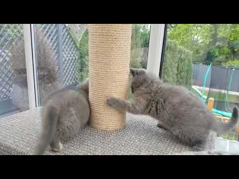 Cute Kittens Playing 😻🐱