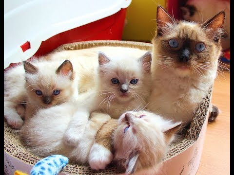 cute kittens purring and playing