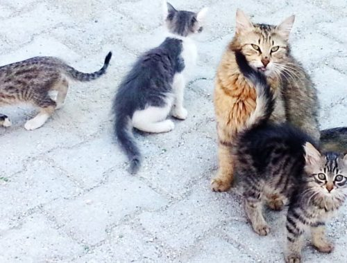 The father and the mother cats, and the cute kittens are eating a home-made food