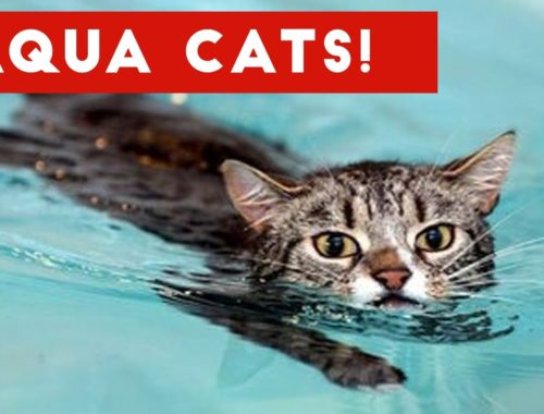 Cutest Cats Playing in Water Compilation 2017   Best Cute Cat Videos Ever
