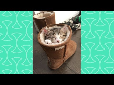 If I fit I sits  - A Funny and Cute Cats sitting on weird position Videos