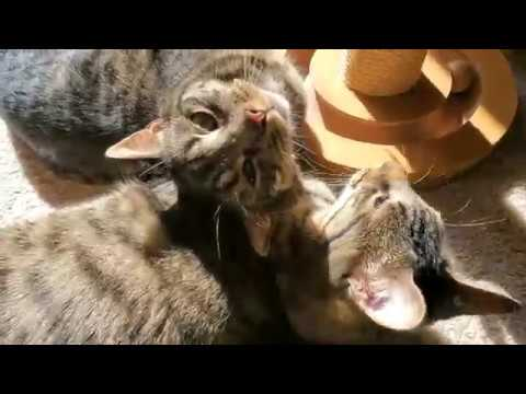 Cute Cats Snuggle in the Sunlight and Purr