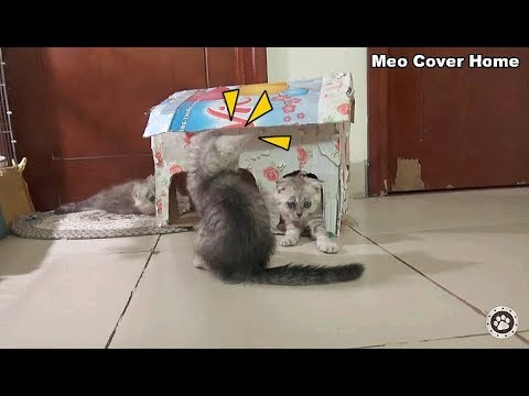 Kittens Playing With House So Cute !