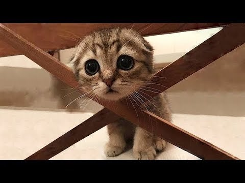 Cute cats and kittens doing funny things 2018