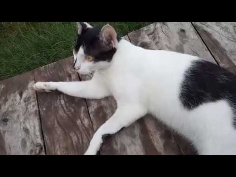 Cute cats playing | cute kittens | Funny Cat video