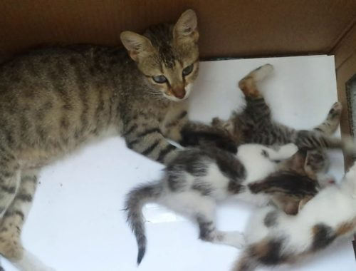 Cute kittens playing with each other and their mom is watching them - Yavru kedilerin halleri