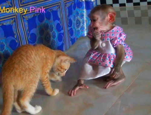 Cute Monkey Baby Pink Playing With Kitten
