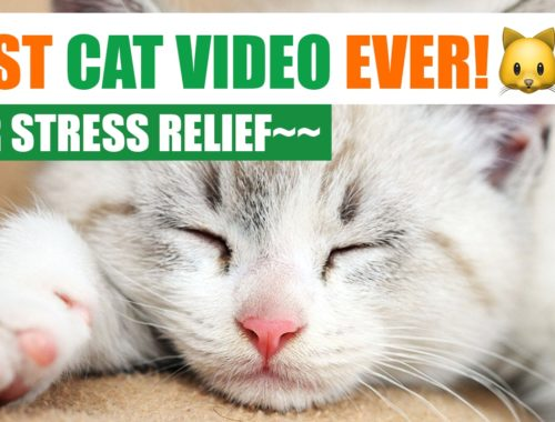 FUNNY AND CUTE CATS COMPILATION (ADORABLE SLEEPY CATS)  | AimWi & HYPNOMI
